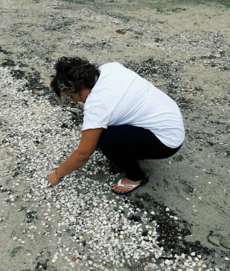 Concha_praia do Jabaquara