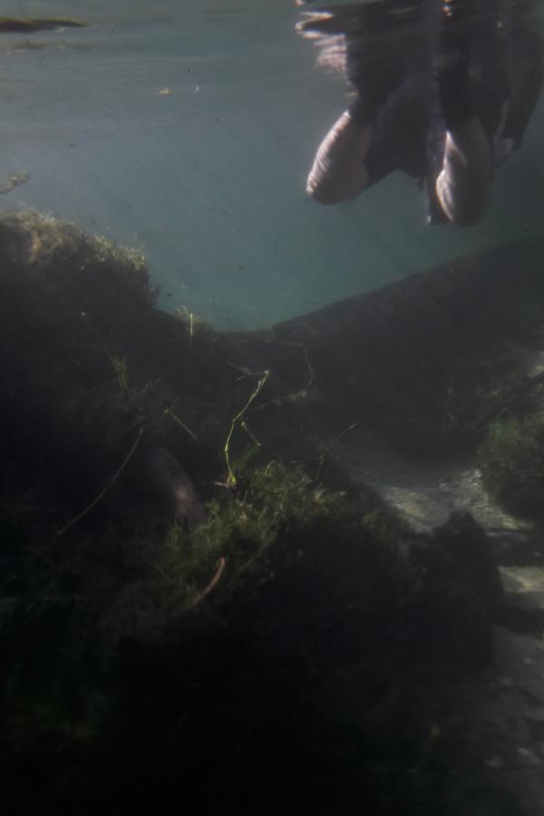 flutuação_rio Sucuri_Bonito_MS